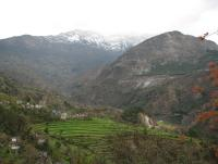 Terrace farming in Uttarakhand
