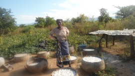 Women participate in food production by soaking Cassava crops in pots, then drying them on racks. Both men and women will benefit from understanding the strategies, tools and skills to implement socio-ecological production landscape (SEPL) initiatives.