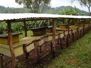 Some of the rehabilitated land in closures are being used for honey production, creating more opportunities for income generation