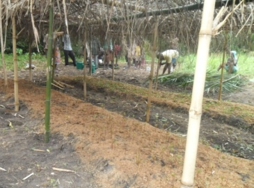 Nursery groups busily transplanting