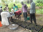 Nursery groups busy transplanting