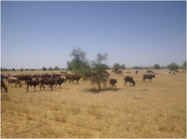 Along with this, fodder species which are a basic resource for stock breeding and a primary economic activity in the area, are now under threat.