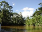 The Amazon region of Ecuador is characterized by a vibrant and diverse indigenous ecology. However, the region has lost nearly 20% of its natural cover within the last fifty years.