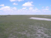 Open grassland in the Ipumbu-ya-Shilongo Conservancy