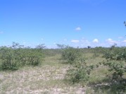 Shrub-covered land in the conservancy