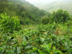 The initiatives will be aiming to build resilience of the coffee farming and fuit growing culture of this region.