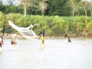 Traditional fishing methods being employed in the ponds of the Bogo region.
