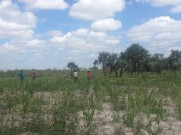 The lack of available freshwater limits the range of crops that are produced within the Conservancy. To mitigate the risk of crop loss as a result of inadequate rainfall, crops are produced through a low-input, low-output system, and are mostly limited to the production of staple crops.